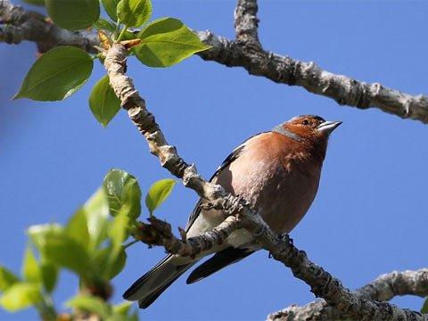 欧盟一项长期研究发现欧洲鸟类难适应气候变暖
