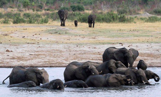 津巴布韦难偿还所欠中国军费,用数十头大象狮子抵债