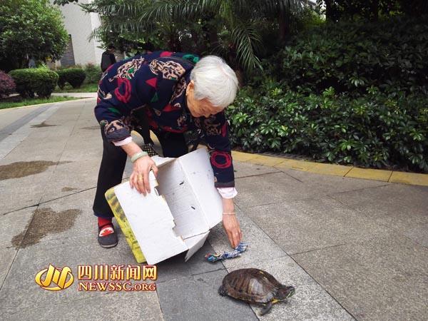 """82 岁老太小区""""溜乌龟"""",曾有人出高价购买"""