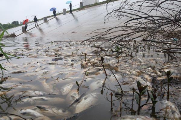 湖南猪场污染稻田 老板为政协委员自挂公安招牌