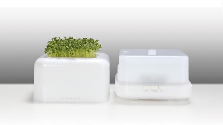 能种植物的加湿器