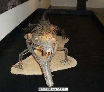 台湾民众上交的古生物化石,也很久后才收到不多的奖励