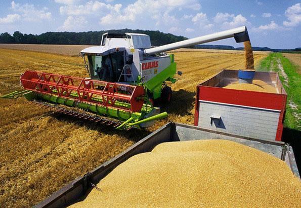 中国粮食现状:一边进口,一边浪费