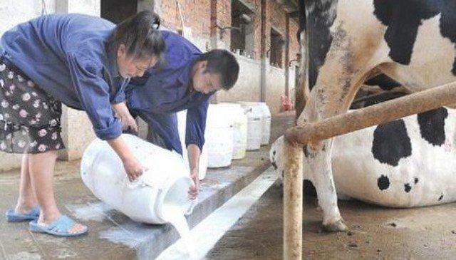 倒奶对奶农而言,虽然悲惨,却也是最佳选择了