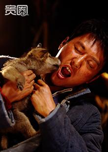冯绍峰与小狼建立了深厚友谊