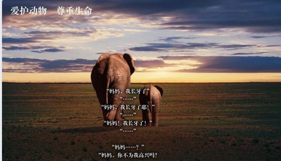 当一个人看到国际爱护动物基金会(IFAW)这样的海报时,很难不受触动