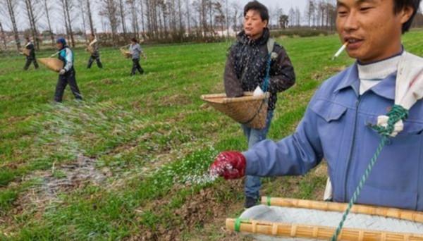 农民自家地里施肥常常过量