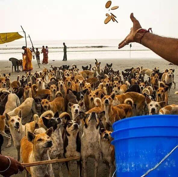 印度恒河附近的居民在喂养流浪狗