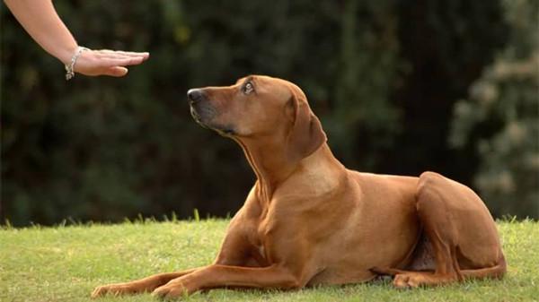 对狗狗进行训练