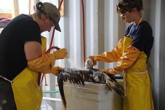 野生动物复健员正在工作