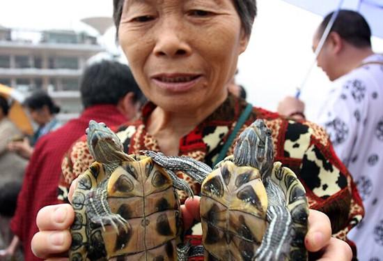 """一名妇女手拿准备""""放生""""的两只巴西龟"""