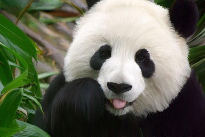 如果涉案动物换为熟悉的大熊猫,舆论会非常不同
