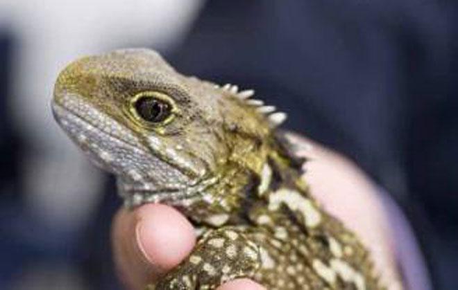 一些常见动物也被列入野生动物保护资源让许多人困惑