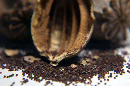 想买到罂粟壳非常容易
