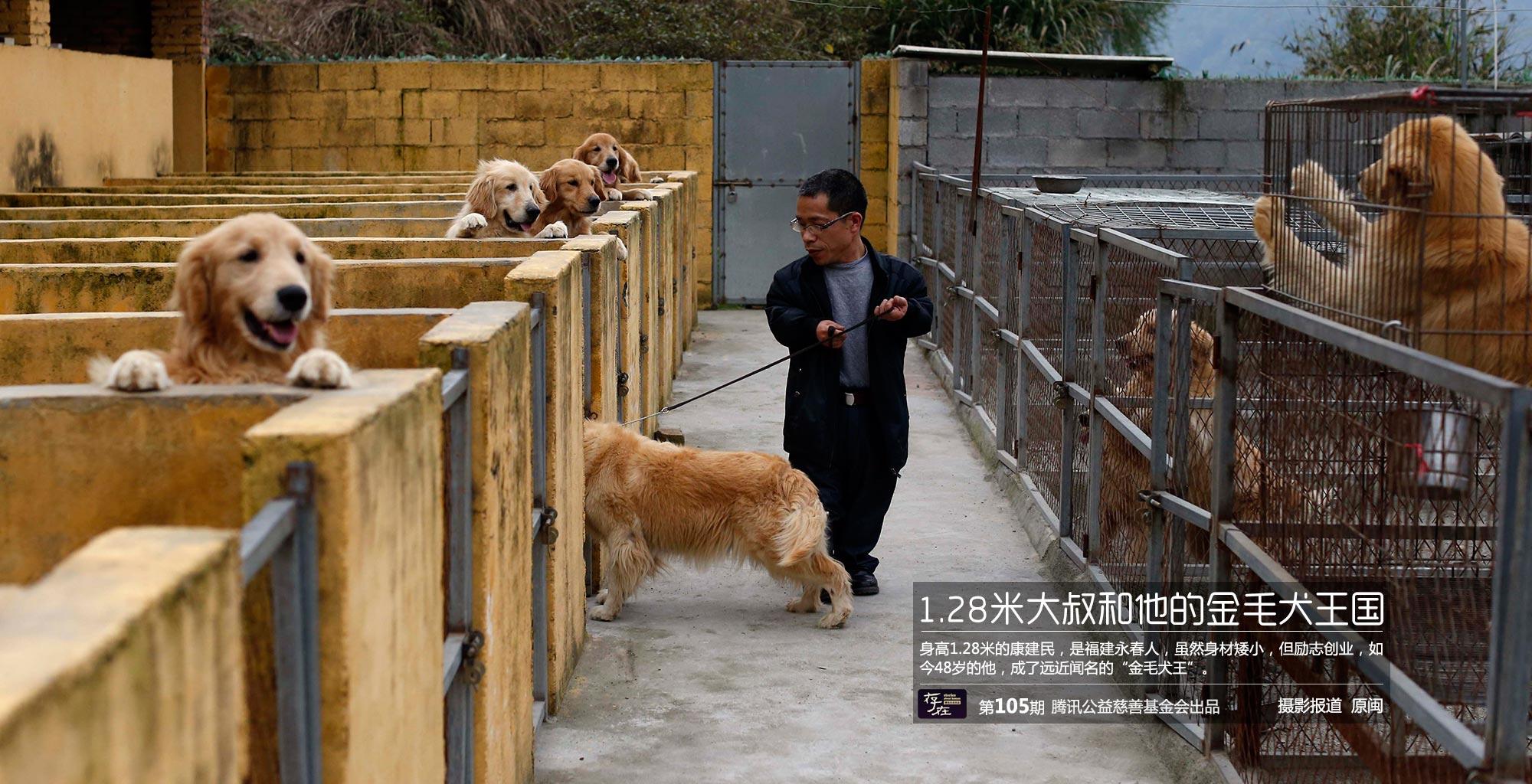 【存在】第105期—1.28米创业大叔和他的金毛犬王国_腾讯公益_腾讯网