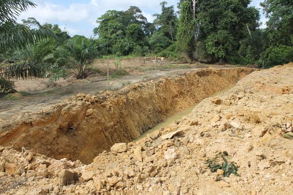 防野象壕沟,也很难阻止野象破坏农作物