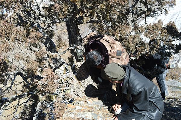 雪豹的行踪非常隐秘,专业人员都不容易发现它的踪迹