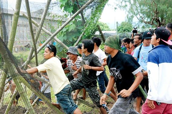 """菲律宾""""黄金大米""""试验田被环保组织破坏"""
