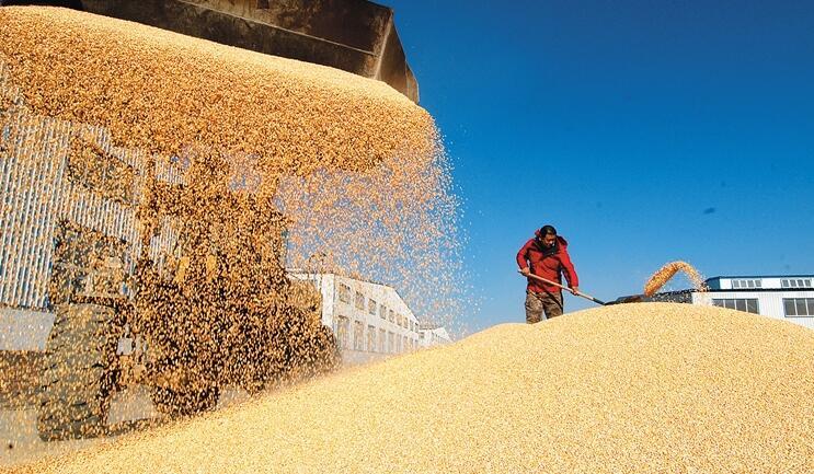 由国家对粮食买卖进行兜底,会让农民失去对市场风险的判断