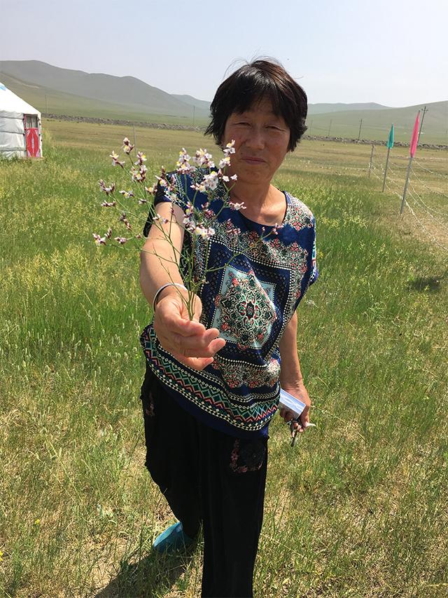 赤峰送花迎客的牧民