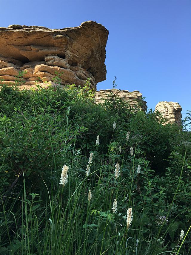赤峰石林野花茂盛
