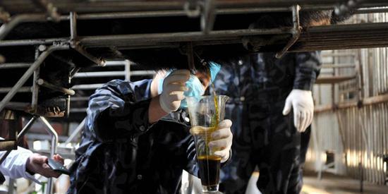 熊场工作人员收集熊胆汁