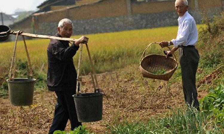 许多老年人不得不务农养老