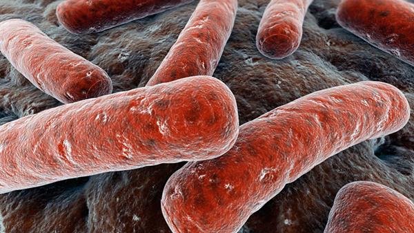 """在与人类的斗争中,结核菌也越来越""""狡猾"""""""