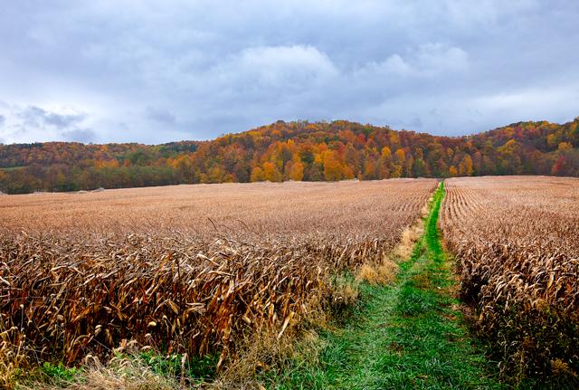 俄亥俄州盛产玉米,当地允许农民有条件焚烧秸秆