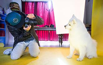 宠物摄影师的双城爱恋_中国人的一天_腾讯新闻_腾讯网