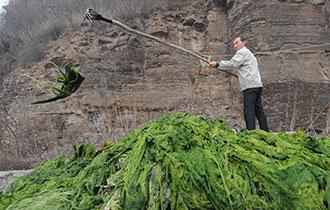 水工扎根深山 年清水草上百吨_中国人的一天_腾讯新闻_腾讯网