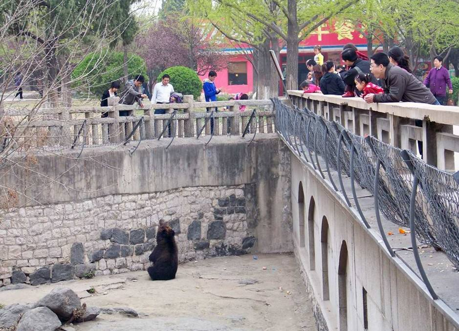 """这种人居高临下,熊几乎没有任何躲藏之地的""""熊山""""设计过去在中国动物园很常见。"""