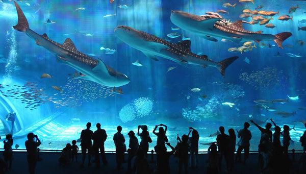 大阪海游馆是亚洲最好的海游馆之一。