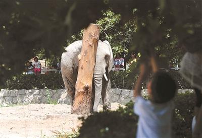 """北京动物园给大象设计的""""痒痒挠"""""""