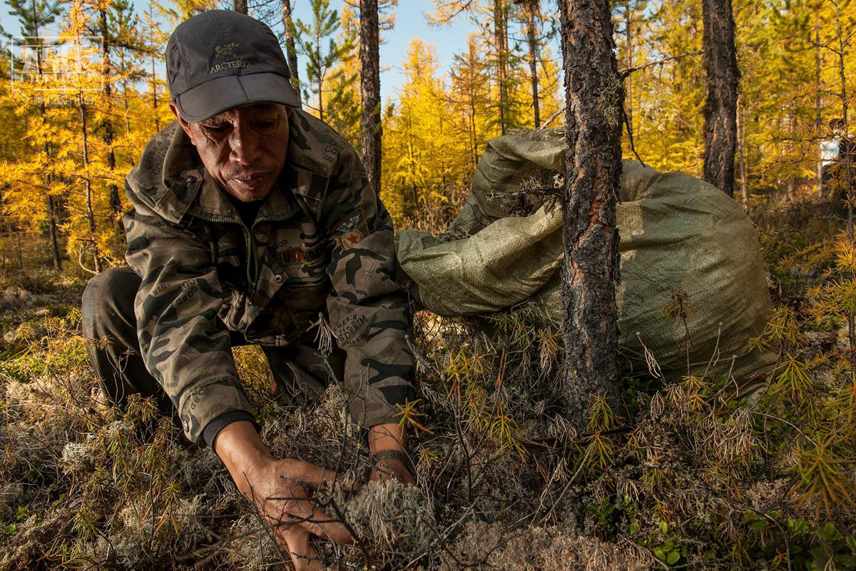 大兴安岭禁伐,森林人的迷惘与希望2017.3.29 - fpdlgswmx - fpdlgswmx的博客