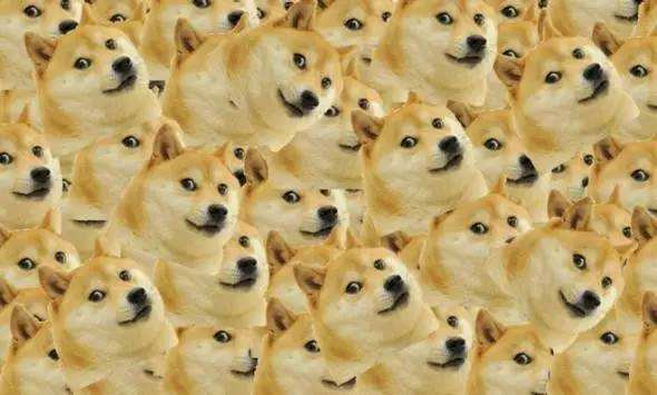 """doge""是一个风行全球的互联网迷因"