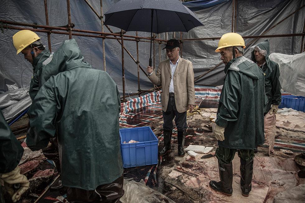 童慎汉撑着雨伞在解剖现场进行指导。(摄影 / 冯海泳)