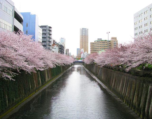 资料图:东京街头