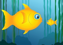 鱼越小越容易富集毒素?