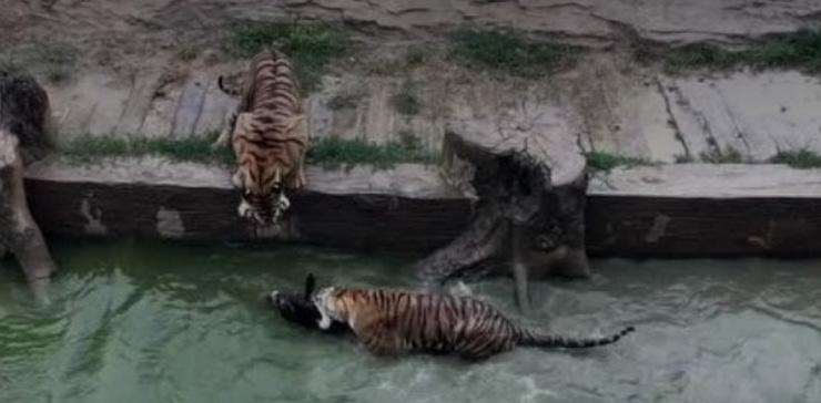 """股东""""活驴喂虎"""":大跃进建动物园的后报复期来临 - 草根花农 - 得之淡然、失之泰然、顺其自然、争其必然"""