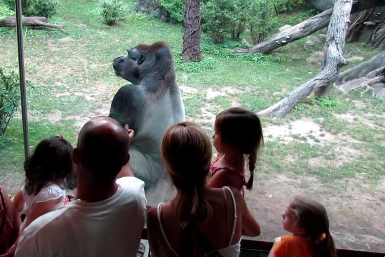 """纽约布朗克斯动物园的""""刚果雨林""""主题展区被认为是沉浸式体验的典范"""