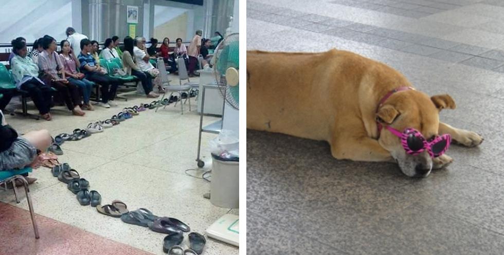 左:泰国人用拖鞋排队;右:流浪狗的墨镜