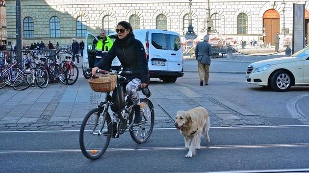 德国养狗要纳税,弃养罚款近20万人民币