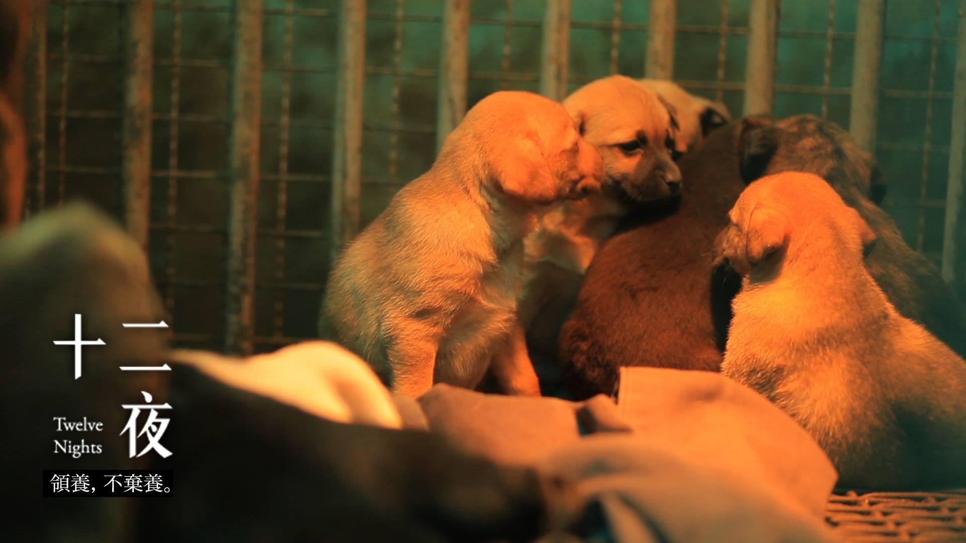 台湾纪录片《十二夜》中,若无人领养就要被安乐死的流浪狗们