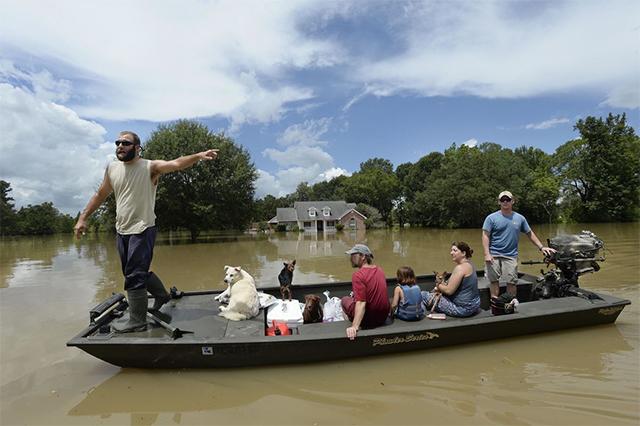 飓风来了,救出你家猫猫狗狗的可能是你的邻居