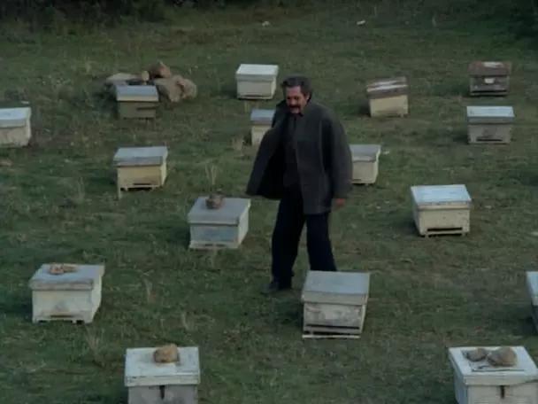 《养蜂人》剧照