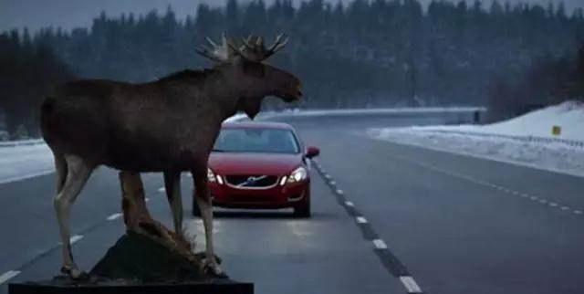 """""""麋鹿测试""""是国际上衡量车辆安全性的重要标准,它检验车辆回避障碍的能力,推动了电子行车稳定系统的普及"""