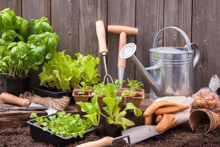 在全球一体化的今天,自己种菜同样要面临环境污染的影响