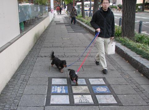 养狗的行为习惯,让日本人底气十足