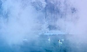 【在线影展】三门峡白天鹅·野生动物国际摄影大展优秀作品
